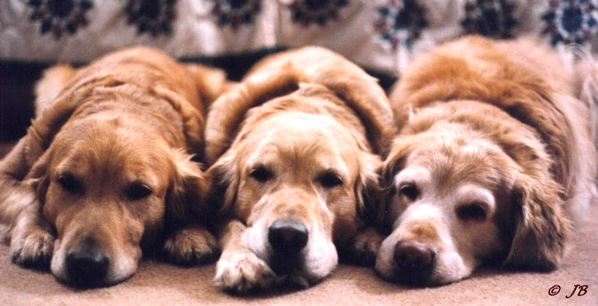 Proper Timing Of Dog Breeding